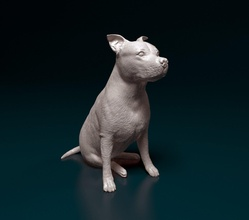 amstaff amstaff amerikanisch Staffordshire Terrier Hund Tier Haustier drucken