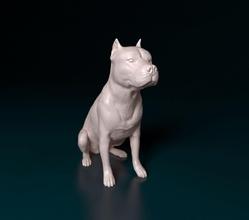 Pitbull weiblich Hund Tier Haustier drucken weiblich Pitbull Pitbull terrier