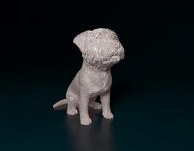 Westen Hochland Weiß Terrier Hund Tier Haustier drucken Westen Weiß Hochland Terrier