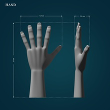 hand model hand finger nail palm lowpoly highpoly printable 3dprint body bodypart touch games toys games toys