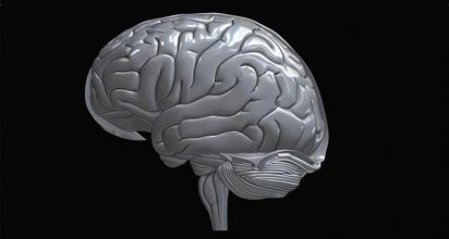 insan beyni gerçekçi yüksek kalite anatomi beyin organ insan beyincik mafsallı gerçekci synapse baş kafatası nöron nöroloji nöroşirürji ameliyat dendrit vücut sinir nörotransmitter serebral önemli değil bilim biyoloji