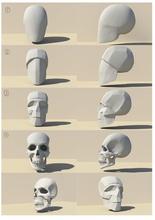 sketchanatomy studying human figure art anatomy character body skull human study education head male brain spine skeleton organ face teeth bone headanatomy maleskull art sculptures