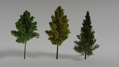 árbol 1140 árbol aire libre hojas perennes conífera naturaleza Arte escaneos réplicas escaneos réplicas
