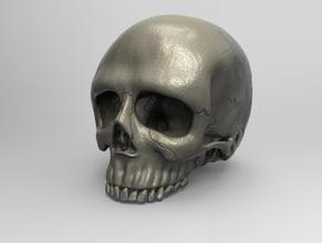 ultra realistic human skull art art sculpture human skull skeleton human skull skull anatomy skull sculpture skull model sculptures