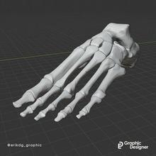 anatomico piede anatomico piede studia medico medico ossatura piedi