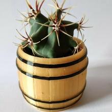 barril cactus maceta flor maceta cactus suculento florero barril decoración flor florero planta maceta jardín jardinería