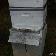 beehive entrance reducermouseguard resized various sport outdoors beekeeping