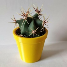 cactus maceta cactus maceta flor maceta ikea suculento planta maceta hogar casa decoración flor florero pequeña maceta jardinería florero