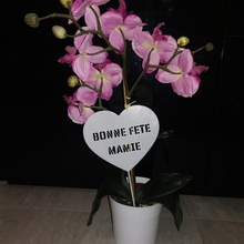 decorative accessory plant grandma's day plant home plant gift box jewelry party grandmother grandma flower