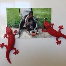 gecko fridge magnet home fridge-magnet fridge magnet fridge magnets magnet kitchen dining