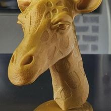 giraffe beauty nature animal giraffe wildlife sculpture head lion elephant beauty