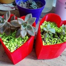 heart pot pot art green garden plants cactus