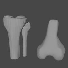 joelho vários joelho fêmur tibia menisco modelo anatômico