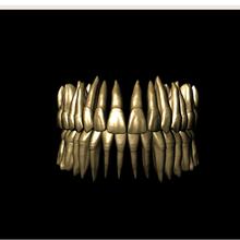 libreria dental con raices adaptada para meshmixer various libreria dental meshmixer anatomia dental stl dental dientes 3d dientes st libreria perez giugovaz dientes con raiz