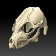 mask head wolf fashion skull wolf furro furry head animal
