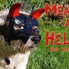 significa el infierno perro helmet fashion cosplay costume devil dogs halloween halloweencostume halloweenscary horns pet pets satan