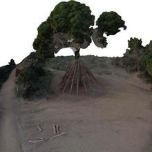 pi Sendungen Arbol Barcelona Borrell Katalonien Collserola Europa ikonisch ikonisch pi Sendungen Kiefer Center Cugat Center messen Scan Baum Sendungen scans_replicas