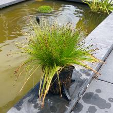 Teich-Anlage montiert home Blume Pflanzer plant base Pflanzer