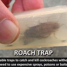 roach trapreusable trap catch kill cockroaches home unique trap tidy solution science school save safety safe roach trap roach practical poison pest organisation money saving money kitchen kil insects insect trap insect innovative household food environmentally environmental education easy print easy designer creature cool control container cockroach trap cockroach clever cleanliness clean catcher catch bugs bug trap bug awesome animals animal
