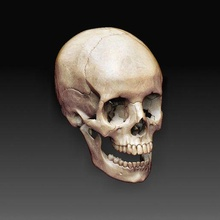 skull 2 anatomy skull printable model art high poly
