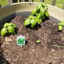 stardew valley garden signs home stardew valley garden sign plant planter stardew
