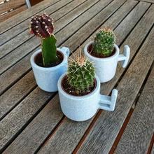torrent cactus pots cactus flowerpot pot plant concrete handle mug land plants garden