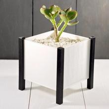 modern Quadrat Pflanzer Box Kaktus Pflanzer Pflanzgefäße Sukkulenten saftig Kakteen succulent planter plantermodern indoor planter