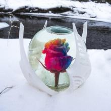 arc ciel Rose globe fleur Rose hiver globe neige arc ciel valentines Saint Valentin reine glaces