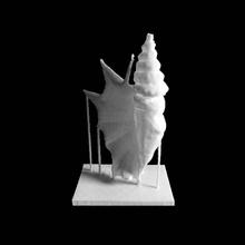 mármol 'spider concha' cáscaras 1 scan antiguo objeto