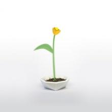 pólipo polígono flor vagem jardim jardinagem plantio carinhoso compartilhar havefunprinting