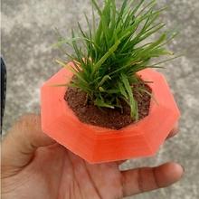 easi ponics Ambiente jardim plantar vermelho água jardinagem plantio plantação easyponics easipônico easi ponics solo