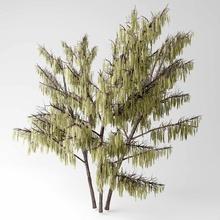 hazel tree alena catkins hazel koval model plant tree