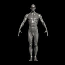 male human-obj ma ascii mb formats 3d anatomy ascii body cg character fishzombie format guys homo human loop lower ma male mammal man maya mb model musculature obj poly sapiens