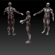 muscleman 3d anatomy beast body character game human kokoronomagnet lower model monster muscleman mutant poly price ready texture