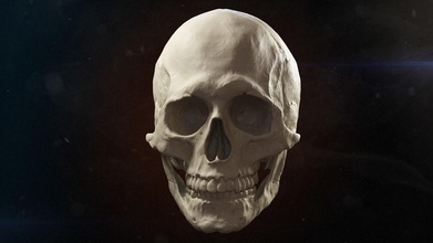 skull advanced 3d 3dsmax advanced alex roe anatomy art body bone character clay digital face game head human man medicine model scary sculpt skelet skull study throne visualisation