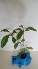 planta comendo homem pinshape resumo plantio potes figura homem planta fábrica panelas planta pot