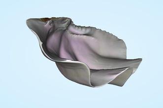 shell pila agua bendita shell tailandia pinshape caña pescar marina concha shell