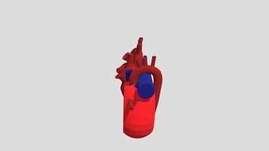 anatom del coraz n - 3d model andreavillamizar139 andreavillamizar139 5a25f37 el coraz n es el rgano principal el sistema cardiovascular est conformado por dos aur culas las cuales reciben sangre y dos ventr culos quienes son las bombas del coraz n su funci n es bombear sangre rica ox geno y nutrientes todo el organismo trav s los vasos sangu neos raz n por cual es coraz n es un rgano vital cuya operaci n normal se requiere constantemente - anatom del coraz n - 3d model andreavillamizar139 andreavillamizar139 5a25f37