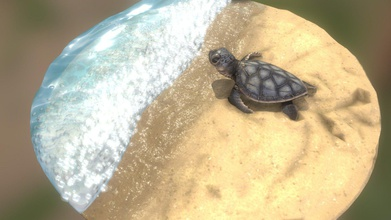baby sea turtle - buy royalty free 3d model hymer hymer b24836a diorama baby sea turtle almost hitting surf his way open sea made zbrush 3ds max substance painter - baby sea turtle - buy royalty free 3d model hymer hymer b24836a