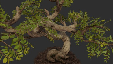 bonasi árvore - exagerado - modelo 3d canis lepophagus canis lepophagus b111bd9 bonsai definitivamente mais divertido que tipo de modelo de árvore de textura tinha muito divertido fazer aprendidas pode melhorar a próxima árvore árvore de jogo cosomoflorist m trabalho de escola grupo de programadores artistas peça central área de plantio terreno quixel megascans 81k tris 2x 2048 texturas uma folha de atlas, um tronco - bonasi árvore - exagerado - modelo 3d canis lepophagus canis lepophagus b111bd9