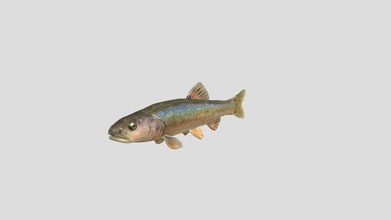 creek chub - download free 3d model mre sauce mre sauce 1cf9d78 fish used part research project made using single side profile picture fish - creek chub - download free 3d model mre sauce mre sauce 1cf9d78