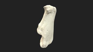 heel bone calcaneus dog - 3d model vetanatmunich vetanatmunich 3883f6c left heel bone calcaneus dog size specimen 60 x 25 x 25 mm 3d scanning performed structured light scanner artec space spider - heel bone calcaneus dog - 3d model vetanatmunich vetanatmunich 3883f6c