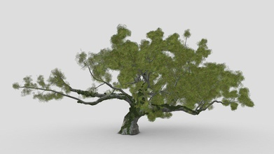 live oak ivy - buy royalty free 3d model asma greenkish2020 cff707e quercus virginiana also known southern live oak evergreen oak tree endemic southeastern united states though many other species loosely called live oak southern live oak particularly iconic old south - live oak ivy - buy royalty free 3d model asma greenkish2020 cff707e