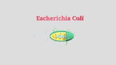 microughs escherichia coli cmgr Scarica gratuito 3d modello cguzmanr2021 cguzmanr2021 5d8c9fe microughs escherichia coli cmgr Scarica gratuito 3d modello cguzmanr2021 cguzmanr2021 5d8c9fe