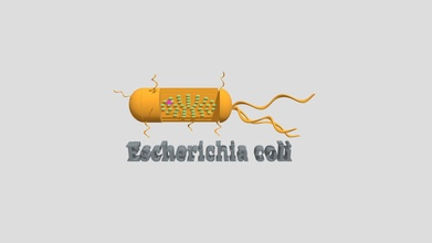 microughs escherichia coli jmc 3d modello jesusamorales02 jesusamorales02 bb6fc5b microughs escherichia coli jmc 3d modello jesusamorales02 jesusamorales02 bb6fc5b
