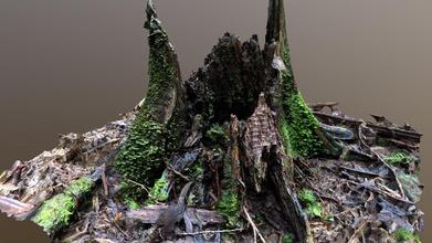 mossy log - 3d model red alert9164 red alert9164 692d4b9 log photoscanned hike yarra ranges north east melbourne australia - mossy log - 3d model red alert9164 red alert9164 692d4b9