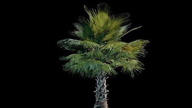 palma albero medio dimensioni acquistare royalty gratuito 3d modello emiraggio emiraggio 1286242 palma albero medio dimensioni acquistare royalty gratuito 3d modello emiraggio
