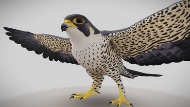 peregrine falcon - 3d model fuzzy paya fuzzypaya de05894 peregrine falcon - 3d model fuzzy paya fuzzypaya de05894