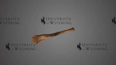 uw6201 - lagomorpha tibia - download grátis de modelo 3d universidade de wyoming libraries uwlibraries 34ff44a época pleistoceno do estado do condado de wyoming condado de albany taxonomia: mammalia&gt lagomorpha lagomorfos irmã grupo de roedores consistem atual-dia coelhos lebres pikas lagomorfos primeiro show até eoceno têm um extenso registro fóssil originários da ásia que se irradia através da ásia, europa, américa do norte longo do cenozóico registro fóssil de lagomorfos moderno lagomorfos ter quantidade significativa taxonômica de separação, o que torna a comparação de estudá-las grupo coeso difícil amostra tibia pleistoceno provavelmente mais próximas moderno lagomorfos que outros fósseis de lagomorfos digitalizado david sls-2 - uw6201 - lagomorpha tibia - download grátis de modelo 3d universidade de wyoming libraries uwlibraries 34ff44a