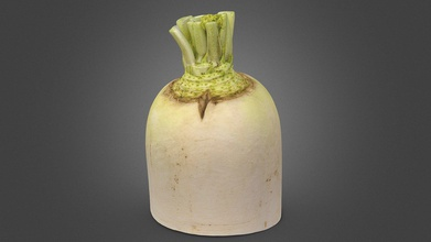 white radish - 3d model yu fft kedar 7fa61fb created realitycapture capturing reality 326 images 00h 01m 08s forgot wipe off water&hellip so geometry too noisy - white radish - 3d model yu fft kedar 7fa61fb